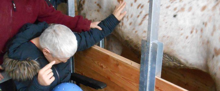 Dienstverleningscentrum De Triangel- Lovendegem- 'Sensomotorische belevingsruimte voor activiteiten met en rond het paard'.